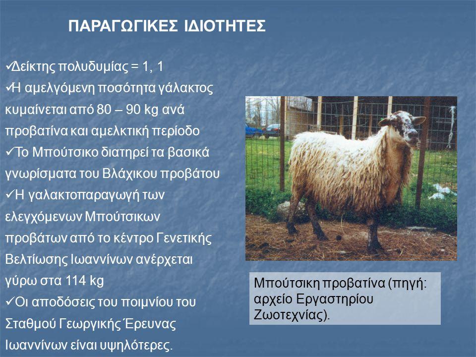 ΦΥΛΗ ΧΙΟΥ Κατάγεται από το ομώνυμο νησί, όπου εκτρέφονται ακόμη μόλις 400 ζώα Στην ηπειρωτική χώρα ο κύριος όγκος εκτροφής του Χιώτικου προβάτου συγκεντρώνεται στην Κεντρική Μακεδονία (νομοί Χαλκιδικής, Θεσσαλονίκης, Ημαθίας και Πέλλας) Μικρός αριθμός ποιμνίων της φυλής εκτρέφεται και σε άλλες περιοχές της χώρας, όπως π.χ.