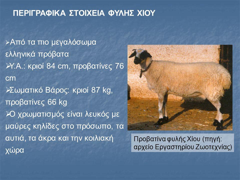 ΠΑΡΑΓΩΓΙΚΕΣ ΙΔΙΟΤΗΤΕΣ ΦΥΛΗΣ ΧΙΟΥ Η φυλή είναι σχετικά πρώιμη, γόνιμη και με υψηλή γαλακτοπαραγωγή Ο δείκτης πολυδυμίας κυμαίνεται από 1,6 - 2,0 Γαλακτοπαραγωγή από 150200 kg Η φυλή είναι ευαίσθητη στις μαστίτιδες και την πιροπλάσμωση Η εκτροφή της κατά το ποιμνιακό σύστημα παρουσιάζει δυσκολίες