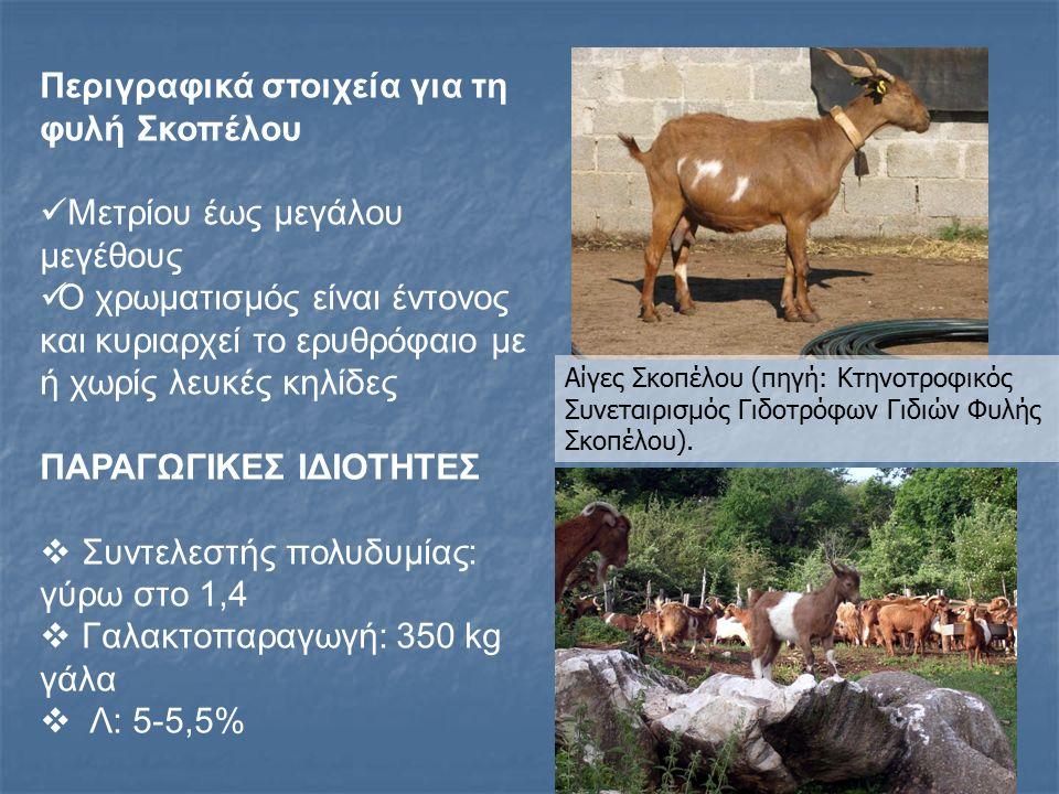 Η σημασία διαφύλαξης των σπάνιων φυλών Τα παραγωγικά ζώα αποτελούν φυσικό πόρο Tις τελευταίες δεκαετίες συνεχώς μειώνεται ο αριθμός των φυλών των παραγωγικών ζώων και πτηνών και συνεπώς ελαττώνεται η γενετική ποικιλομορφία στα διάφορα είδη ζώων Γηγενείς (αυτόχθονες) φυλές αντικαθίστανται από βελτιωμένες και πιο παραγωγικές, που αν και σχετικά λίγες, διαδόθηκαν ευρέως και κυριαρχούν παντού