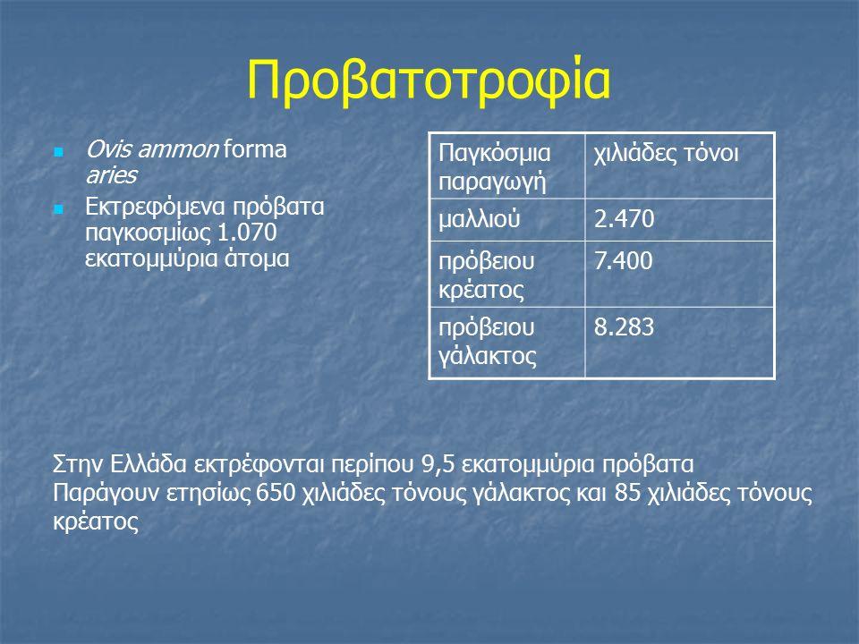 Ελληνικές φυλές προβάτων  Κατατάσσονται στα γαλακτοπαραγωγά πρόβατα, μακρύουρα πρόβατα  Ανάλογα με το πλάτος της ουράς και το μαλλί διακρίνονται σε: B.