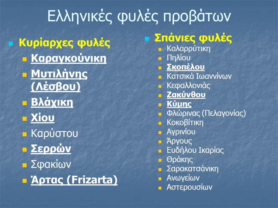 ΚΑΡΑΓΚΟΥΝΙΚΟ ΠΡΟΒΑΤΟ Εκπροσωπεί τον πεδινό τύπο της Εγχώριας φυλής και είναι από τα πιο γνωστά ελληνικά πρόβατα Εκτρέφεται κυρίως στο δυτικό τμήμα της Θεσσαλίας Ο αριθμός των αμιγώς εκτρεφόμενων προβάτων υπερβαίνει τα 200.000 άτομα ΠΕΡΙΓΡΑΦΙΚΑ ΣΤΟΙΧΕΙΑ  Το Καραγκούνικο πρόβατο είναι μεγαλόσωμο με Υ.Α.: κριοί 78 cm, προβατίνες 68 cm και Σωματικό Βάρος: κριοί 80 kg, προβατίνες 57 kg  Ο χρωματισμός ποικίλλει σε ευρέα όρια, αφού συναντώνται ζώα με μαύρο χρώμα, λευκά με μελανές κηλίδες στο σώμα, το πρόσωπο, τα αυτιά και τα άκρα και άλλα εντελώς λευκά.