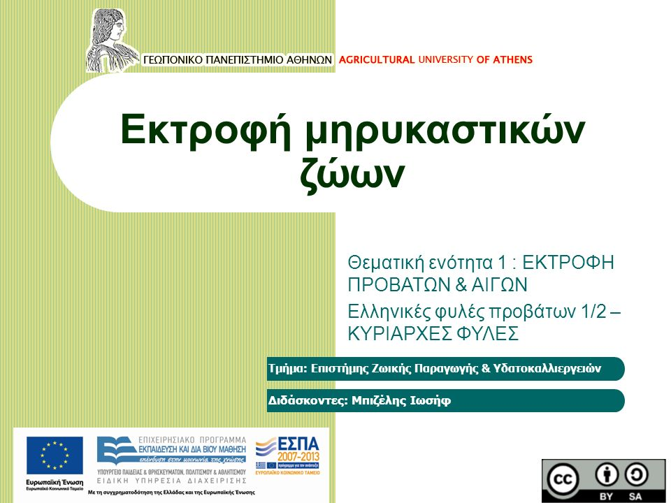 Εκτροφή μηρυκαστικών ζώων Θεματική ενότητα 1 : ΕΚΤΡΟΦΗ ΠΡΟΒΑΤΩΝ & ΑΙΓΩΝ Ελληνικές φυλές προβάτων 1/2 – ΚΥΡΙΑΡΧΕΣ ΦΥΛΕΣ Τμήμα: Επιστήμης Ζωικής Παραγωγής & Υδατοκαλλιεργειών Διδάσκοντες: Μπιζέλης Ιωσήφ