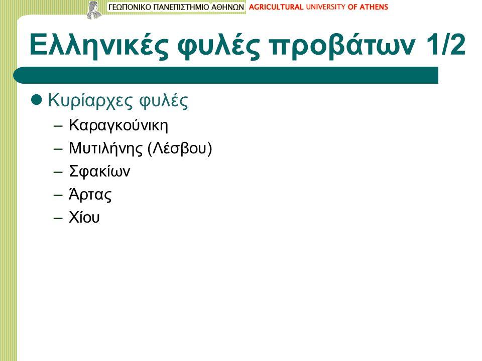 Ελληνικές φυλές προβάτων 1/2 Κυρίαρχες φυλές –Καραγκούνικη –Μυτιλήνης (Λέσβου) –Σφακίων –Άρτας –Χίου