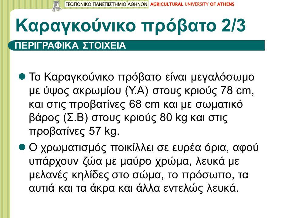 ΠΕΡΙΓΡΑΦΙΚΑ ΣΤΟΙΧΕΙΑ Το Καραγκούνικο πρόβατο είναι μεγαλόσωμο με ύψος ακρωμίου (Υ.Α) στους κριούς 78 cm, και στις προβατίνες 68 cm και με σωματικό βάρος (Σ.Β) στους κριούς 80 kg και στις προβατίνες 57 kg.