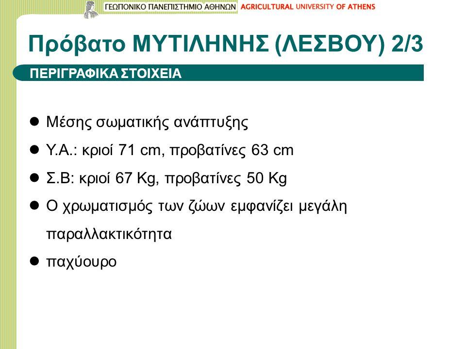 Πρόβατο ΜΥΤΙΛΗΝΗΣ (ΛΕΣΒΟΥ) 2/3 Μέσης σωματικής ανάπτυξης Υ.Α.: κριοί 71 cm, προβατίνες 63 cm Σ.Β: κριοί 67 Kg, προβατίνες 50 Kg Ο χρωματισμός των ζώων εμφανίζει μεγάλη παραλλακτικότητα παχύουρο ΠΕΡΙΓΡΑΦΙΚΑ ΣΤΟΙΧΕΙΑ