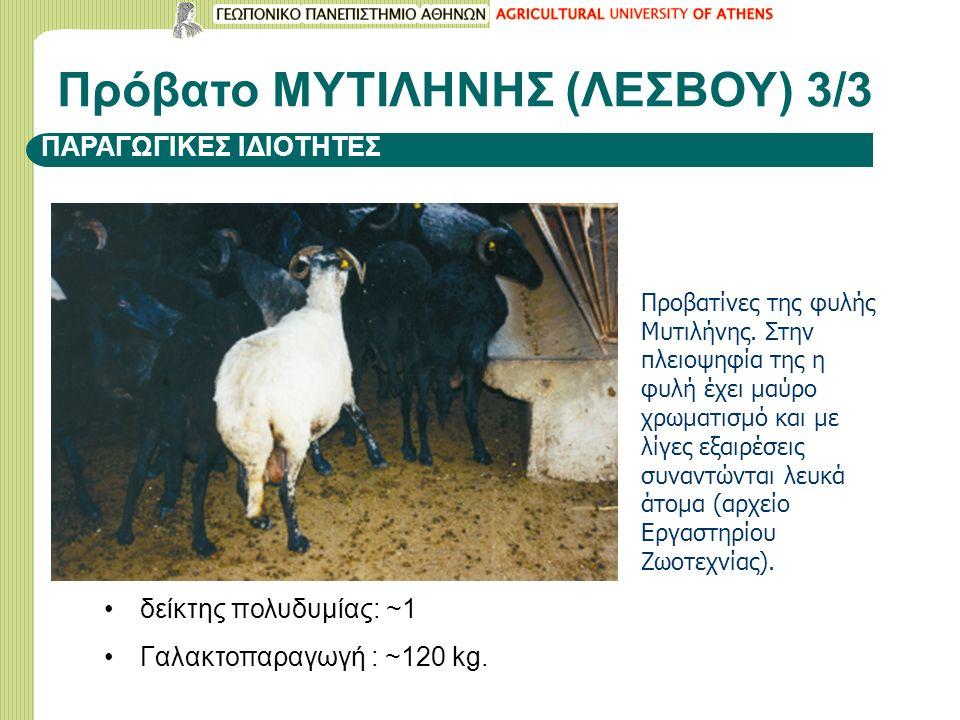 ΠΑΡΑΓΩΓΙΚΕΣ ΙΔΙΟΤΗΤΕΣ δείκτης πολυδυμίας: ~1 Γαλακτοπαραγωγή : ~120 kg.