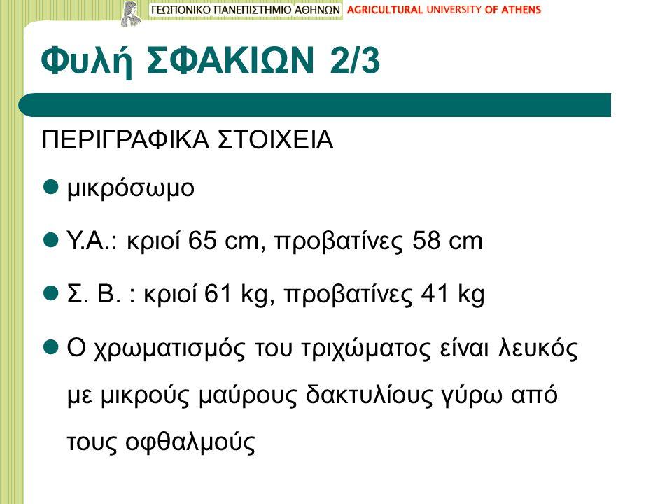 Φυλή ΣΦΑΚΙΩΝ 2/3 ΠΕΡΙΓΡΑΦΙΚΑ ΣΤΟΙΧΕΙΑ μικρόσωμο Υ.Α.: κριοί 65 cm, προβατίνες 58 cm Σ.