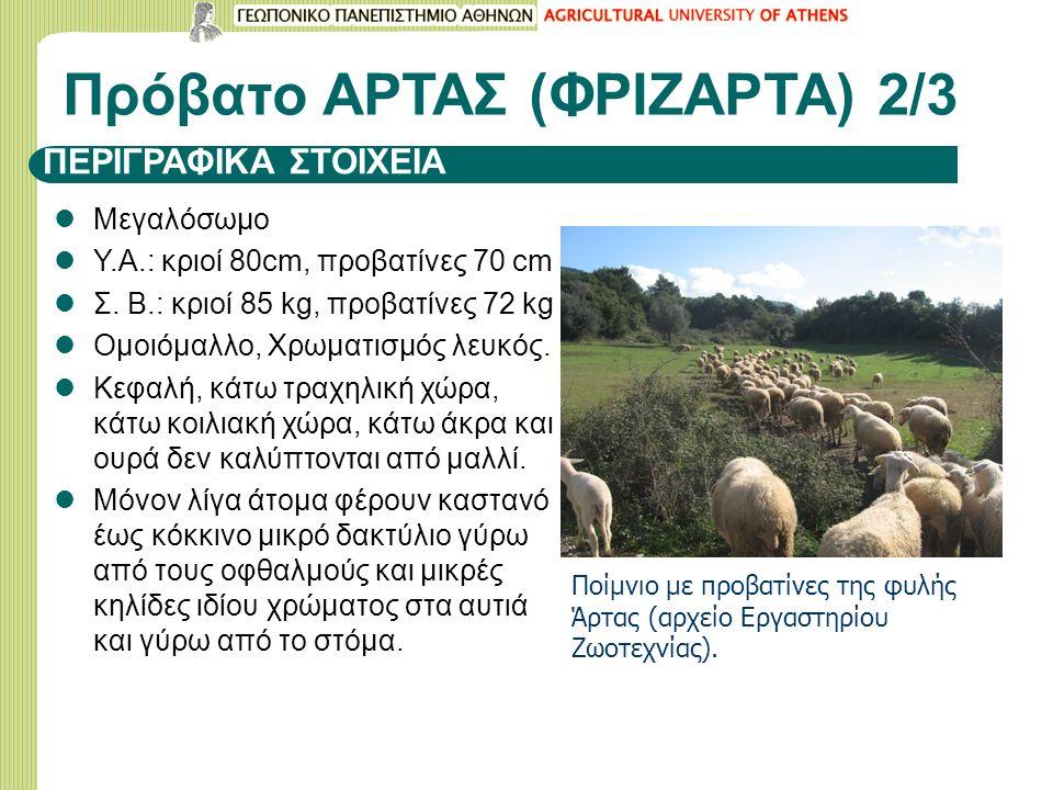 ΠΕΡΙΓΡΑΦΙΚΑ ΣΤΟΙΧΕΙΑ Μεγαλόσωμο Υ.Α.: κριοί 80cm, προβατίνες 70 cm Σ.