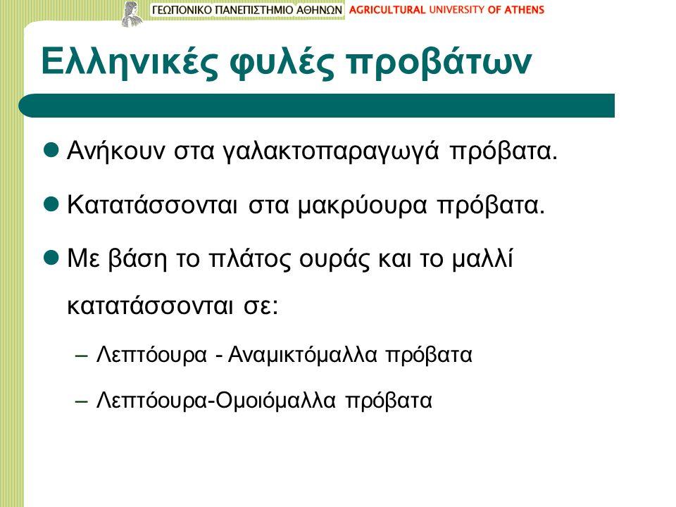Ελληνικές φυλές προβάτων Ανήκουν στα γαλακτοπαραγωγά πρόβατα.