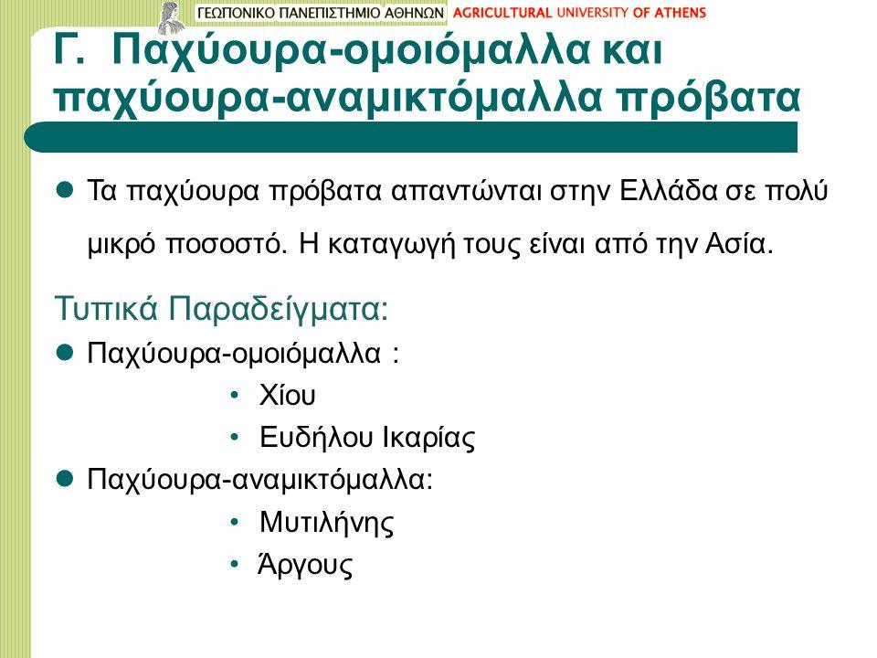 Γ. Παχύουρα-ομοιόμαλλα και παχύουρα-αναμικτόμαλλα πρόβατα Τα παχύουρα πρόβατα απαντώνται στην Ελλάδα σε πολύ μικρό ποσοστό. Η καταγωγή τους είναι από