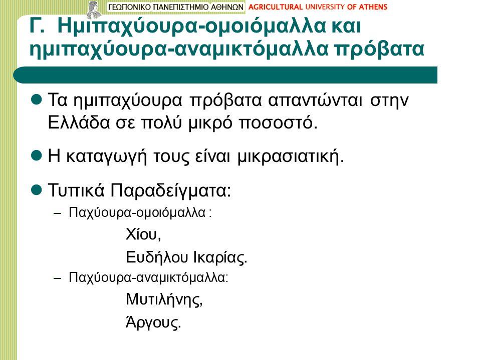 Γ. Ημιπαχύουρα-ομοιόμαλλα και ημιπαχύουρα-αναμικτόμαλλα πρόβατα Τα ημιπαχύουρα πρόβατα απαντώνται στην Ελλάδα σε πολύ μικρό ποσοστό. Η καταγωγή τους ε