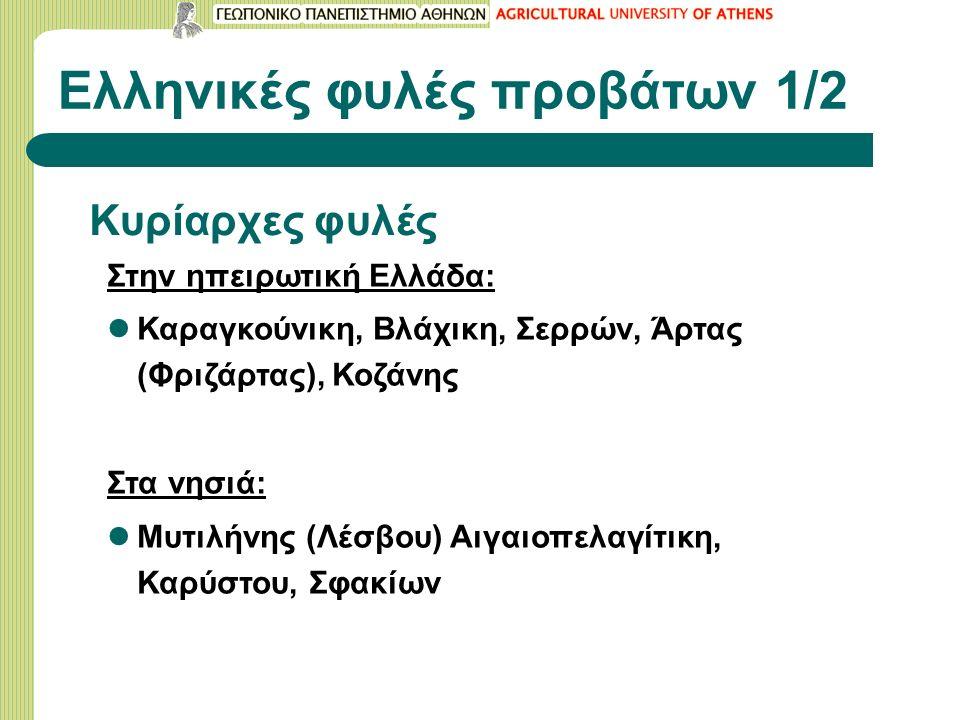 Ελληνικές φυλές προβάτων 1/2 Κυρίαρχες φυλές Στην ηπειρωτική Ελλάδα: Καραγκούνικη, Βλάχικη, Σερρών, Άρτας (Φριζάρτας), Κοζάνης Στα νησιά: Μυτιλήνης (Λέσβου) Αιγαιοπελαγίτικη, Καρύστου, Σφακίων