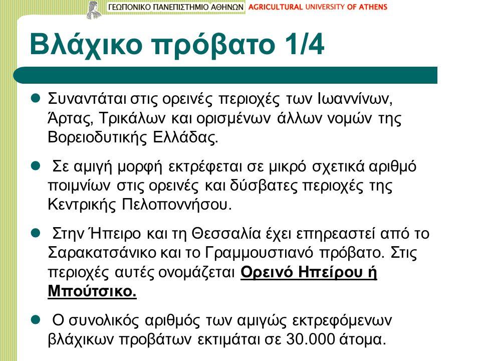 Βλάχικο πρόβατο 1/4 Συναντάται στις ορεινές περιοχές των Ιωαννίνων, Άρτας, Τρικάλων και ορισμένων άλλων νομών της Βορειοδυτικής Ελλάδας.