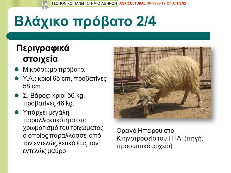 Βλάχικο πρόβατο 2/4 Περιγραφικά στοιχεία Μικρόσωμο πρόβατο.
