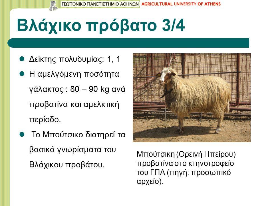 Βλάχικο πρόβατο 3/4 Δείκτης πολυδυμίας: 1, 1 Η αμελγόμενη ποσότητα γάλακτος : 80 – 90 kg αvά προβατίνα και αμελκτική περίοδο.