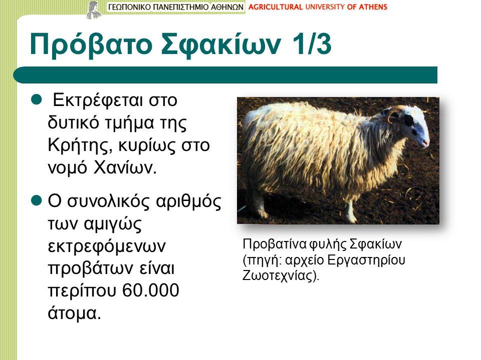 Πρόβατο Σφακίων 1/3 Εκτρέφεται στο δυτικό τμήμα της Κρήτης, κυρίως στο νομό Χανίων.