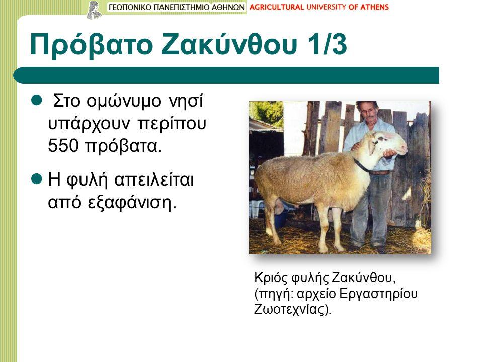 Πρόβατο Ζακύνθου 1/3 Στο ομώνυμο νησί υπάρχουν περίπου 550 πρόβατα.