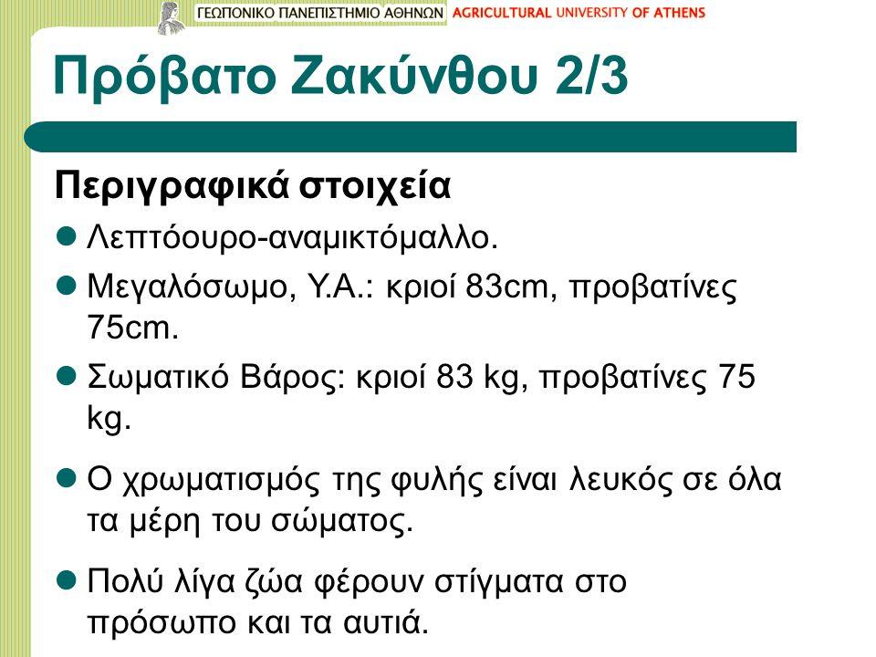 Πρόβατο Ζακύνθου 2/3 Περιγραφικά στοιχεία Λεπτόουρο-αναμικτόμαλλο.