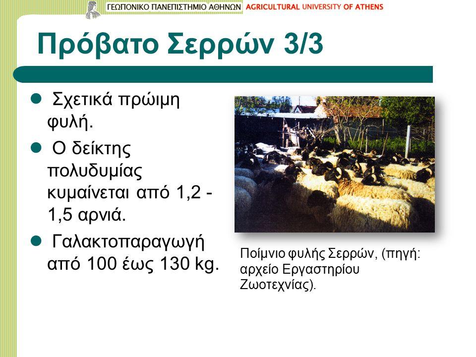 Πρόβατο Σερρών 3/3 Σχετικά πρώιμη φυλή. Ο δείκτης πολυδυμίας κυμαίνεται από 1,2 - 1,5 αρνιά.