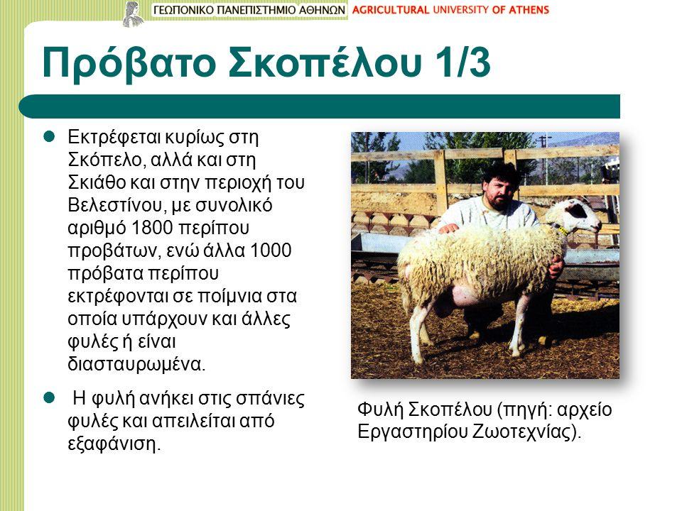 Πρόβατο Σκοπέλου 1/3 Εκτρέφεται κυρίως στη Σκόπελο, αλλά και στη Σκιάθο και στην περιοχή του Βελεστίνου, με συνολικό αριθμό 1800 περίπου προβάτων, ενώ άλλα 1000 πρόβατα περίπου εκτρέφονται σε ποίμνια στα οποία υπάρχουν και άλλες φυλές ή είναι διασταυρωμένα.