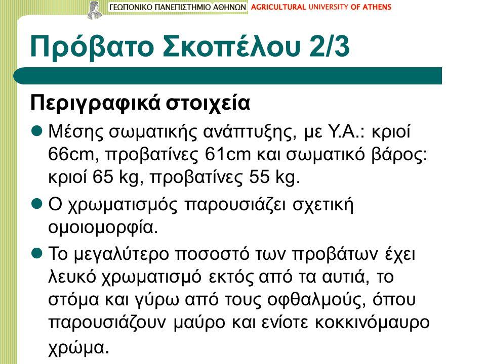 Πρόβατο Σκοπέλου 2/3 Περιγραφικά στοιχεία Μέσης σωματικής ανάπτυξης, με Υ.Α.: κριοί 66cm, προβατίνες 61cm και σωματικό βάρος: κριοί 65 kg, προβατίνες 55 kg.