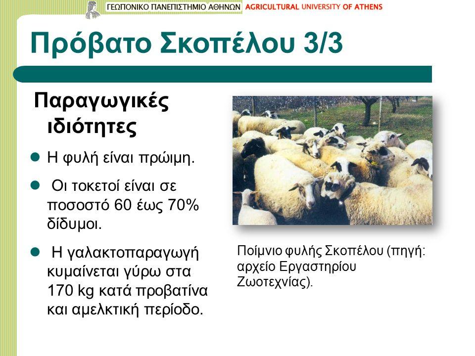 Πρόβατο Σκοπέλου 3/3 Παραγωγικές ιδιότητες Η φυλή είναι πρώιμη.