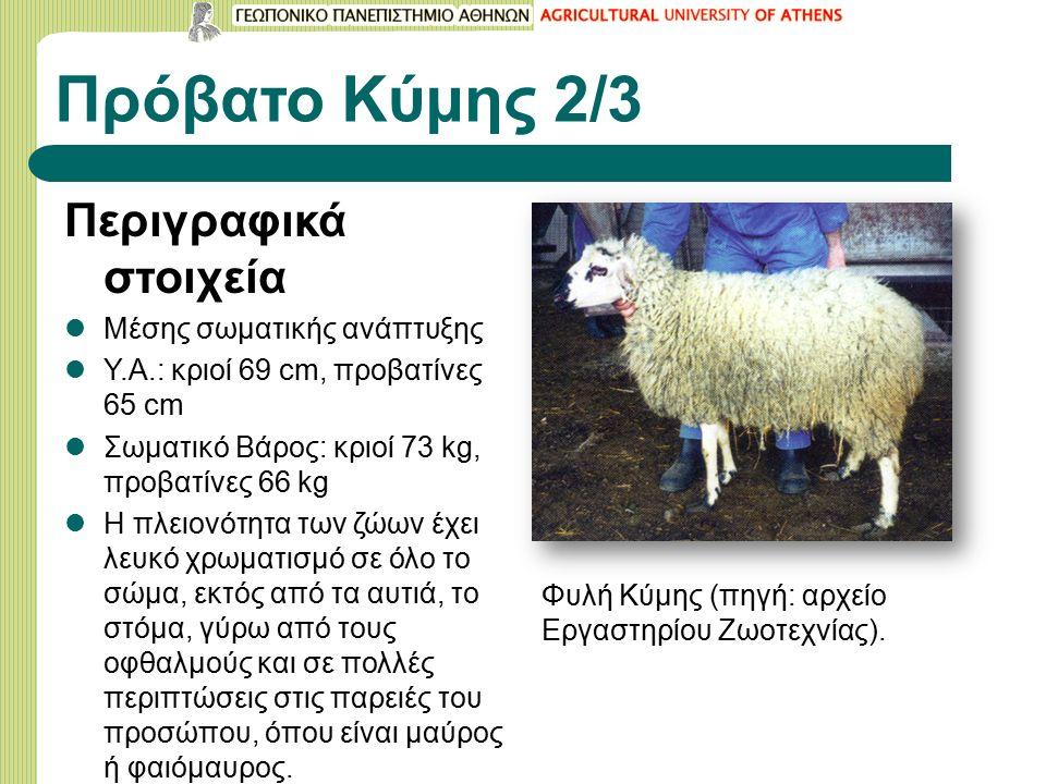 Πρόβατο Κύμης 2/3 Περιγραφικά στοιχεία Μέσης σωματικής ανάπτυξης Υ.Α.: κριοί 69 cm, προβατίνες 65 cm Σωματικό Βάρος: κριοί 73 kg, προβατίνες 66 kg Η πλειονότητα των ζώων έχει λευκό χρωματισμό σε όλο το σώμα, εκτός από τα αυτιά, το στόμα, γύρω από τους οφθαλμούς και σε πολλές περιπτώσεις στις παρειές του προσώπου, όπου είναι μαύρος ή φαιόμαυρος.