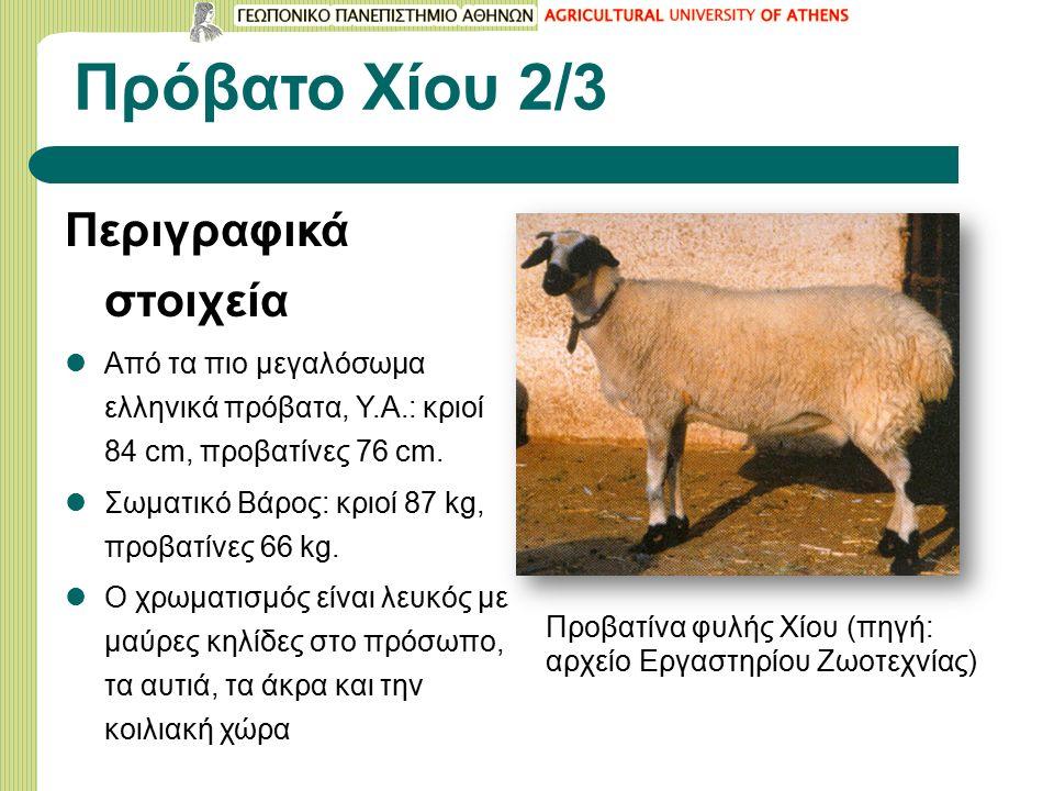 Πρόβατο Χίου 2/3 Περιγραφικά στοιχεία Από τα πιο μεγαλόσωμα ελληνικά πρόβατα, Υ.Α.: κριοί 84 cm, προβατίνες 76 cm.