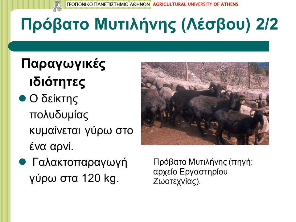 Πρόβατο Μυτιλήνης (Λέσβου) 2/2 Παραγωγικές ιδιότητες Ο δείκτης πολυδυμίας κυμαίνεται γύρω στο ένα αρνί.