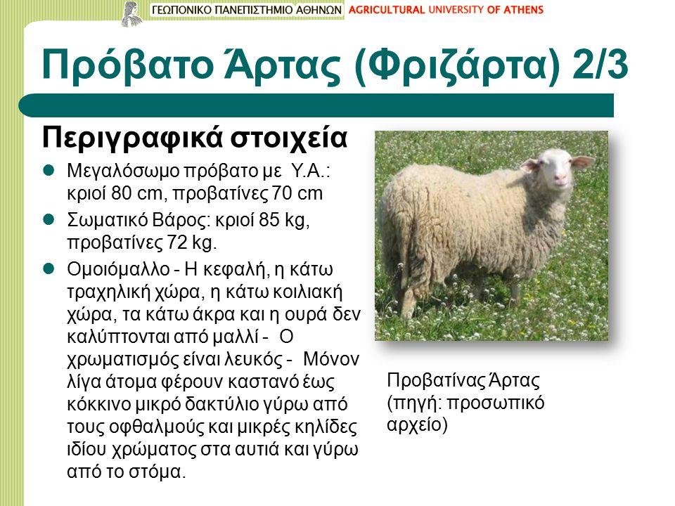 Περιγραφικά στοιχεία Μεγαλόσωμο πρόβατο με Υ.Α.: κριοί 80 cm, προβατίνες 70 cm Σωματικό Βάρος: κριοί 85 kg, προβατίνες 72 kg.