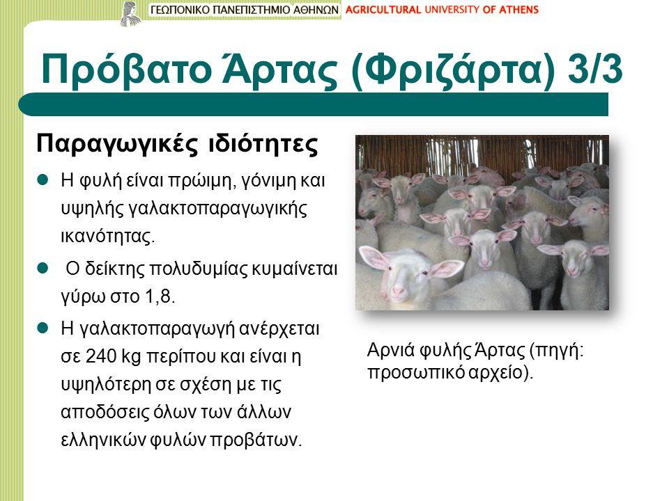 Πρόβατο Άρτας (Φριζάρτα) 3/3 Παραγωγικές ιδιότητες Η φυλή είναι πρώιμη, γόνιμη και υψηλής γαλακτοπαραγωγικής ικανότητας.