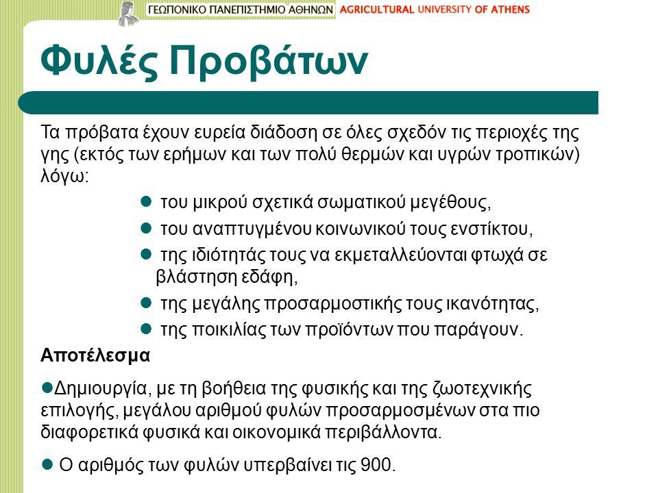Ταξινόμηση των φυλών Τύπος αποδιδόμενου μαλλιού (ερίου) Τριχοπρόβατα Αναμικτόμαλλα Ομοιόμαλλα Μερινόμαλλα Κύρια παραγωγική κατεύθυνση Γαλακτοπαραγωγές Κρεοπαραγωγές Εριοπαραγωγές Κρεοπαραγωγές-εριοπαραγωγές Μήκος και διάπλαση της ουράς Μακρύουρες Βραχύουρες Παχύουρες & Ημιπαχύουρες