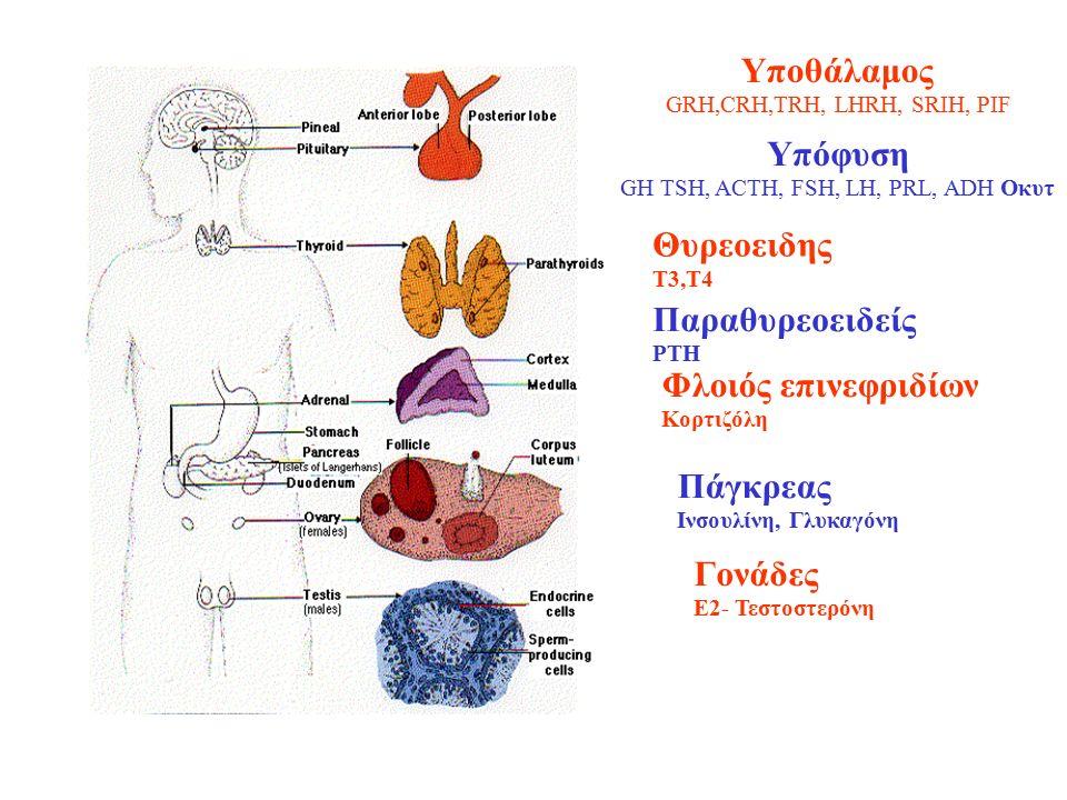 Υποθάλαμος GRH,CRH,TRH, LHRH, SRIH, PIF Ι Υπόφυση GH TSH, ACTH, FSH, LH, PRL, ADH Οκυτ Θυρεοειδης Τ3,Τ4 Παραθυρεοειδείς PTH Φλοιός επινεφριδίων Κορτιζόλη Πάγκρεας Ινσουλίνη, Γλυκαγόνη Γονάδες Ε2- Τεστοστερόνη