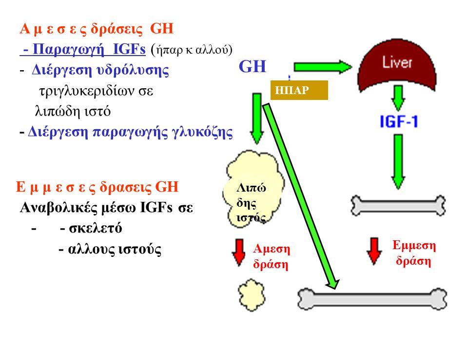 Ε μ μ ε σ ε ς δρασεις GH Αναβολικές μέσω IGFs σε - - σκελετό - αλλους ιστούς GH ΗΠΑΡ Αμεση δράση Εμμεση δράση Α μ ε σ ε ς δράσεις GH - Παραγωγή ΙGFs ( ήπαρ κ αλλού) - Διέργεση υδρόλυσης τριγλυκεριδίων σε λιπώδη ιστό - Διέργεση παραγωγής γλυκόζης Λιπώ δης ιστός