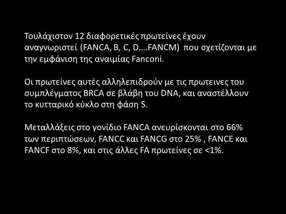 Τουλάχιστον 12 διαφορετικές πρωτείνες έχουν αναγνωριστεί (FANCA, B, C, D….FANCM) που σχετίζονται με την εμφάνιση της αναιμίας Fanconi.