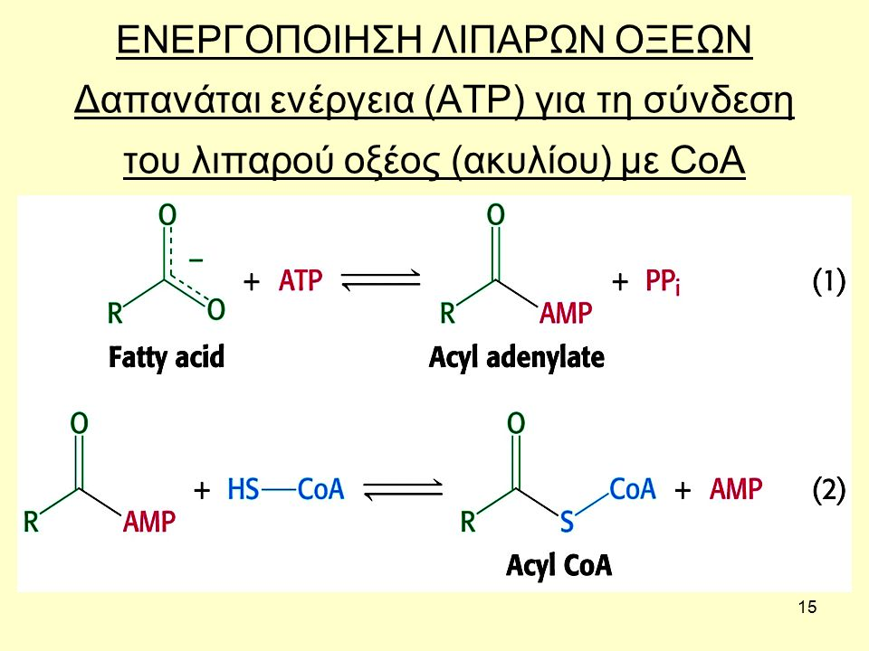 15 ΕΝΕΡΓΟΠΟΙΗΣΗ ΛΙΠΑΡΩΝ ΟΞΕΩΝ Δαπανάται ενέργεια (ΑΤΡ) για τη σύνδεση του λιπαρού οξέος (ακυλίου) με CoA