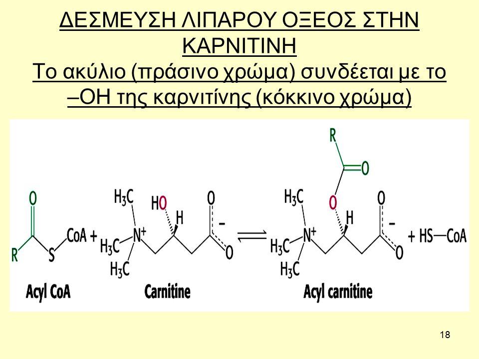 18 ΔΕΣΜΕΥΣΗ ΛΙΠΑΡΟΥ ΟΞΕΟΣ ΣΤΗΝ ΚΑΡΝΙΤΙΝΗ Το ακύλιο (πράσινο χρώμα) συνδέεται με το –ΟΗ της καρνιτίνης (κόκκινο χρώμα)
