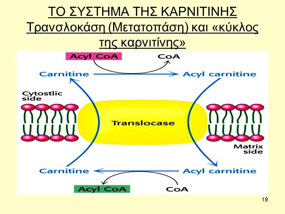 19 ΤΟ ΣΥΣΤΗΜΑ ΤΗΣ ΚΑΡΝΙΤΙΝΗΣ Τρανσλοκάση (Μετατοπάση) και «κύκλος της καρνιτίνης»