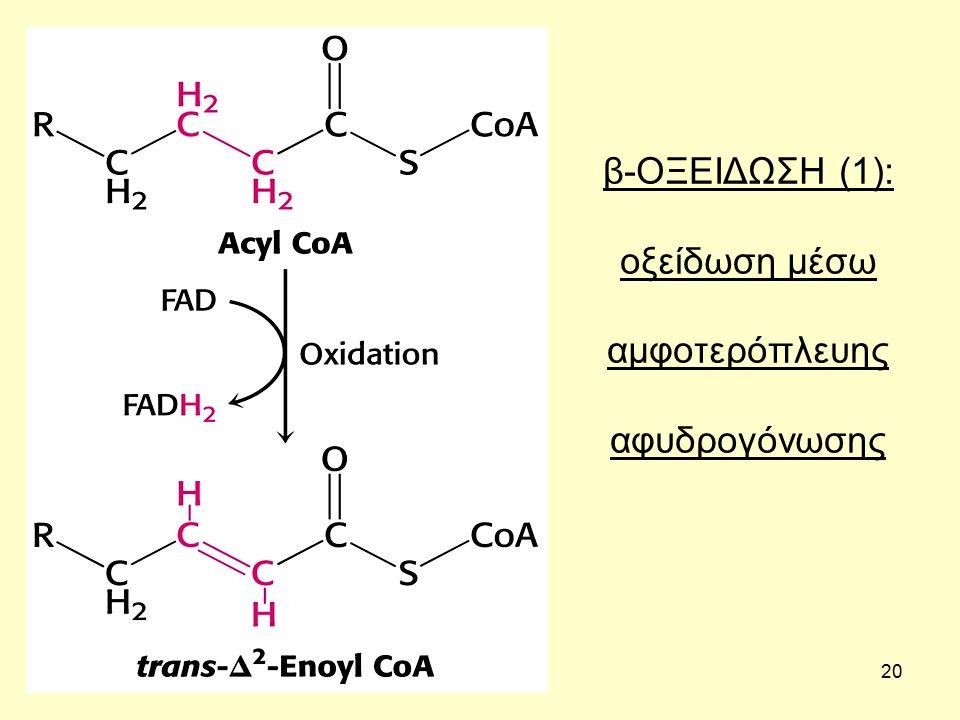 20 β-ΟΞΕΙΔΩΣΗ (1): οξείδωση μέσω αμφοτερόπλευης αφυδρογόνωσης