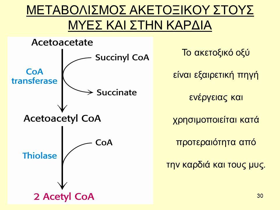 30 ΜΕΤΑΒΟΛΙΣΜΟΣ ΑΚΕΤΟΞΙΚΟΥ ΣΤΟΥΣ ΜΥΕΣ ΚΑΙ ΣΤΗΝ ΚΑΡΔΙΑ Το ακετοξικό οξύ είναι εξαιρετική πηγή ενέργειας και χρησιμοποιείται κατά προτεραιότητα από την καρδιά και τους μυς.
