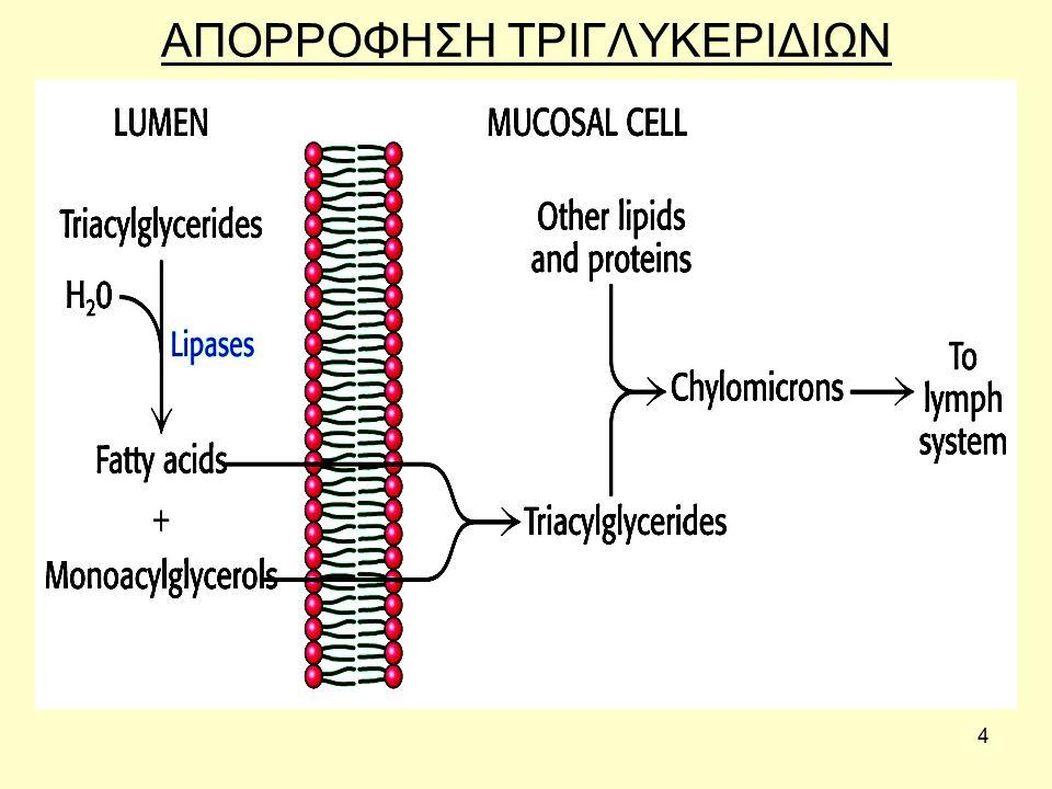 35 Τα λιπαρά οξέα κυκλοφορούν πάντα δεσμευμένα σε πρωτεΐνες