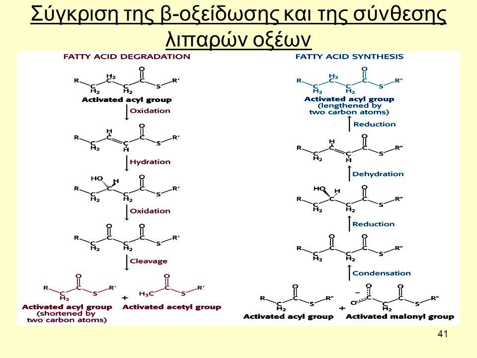 41 Σύγκριση της β-οξείδωσης και της σύνθεσης λιπαρών οξέων