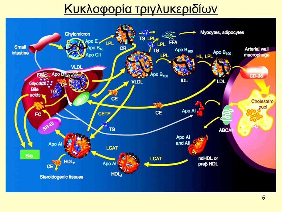 6 Μεταβολισμός μονο-, δι- και τρι-γλυκεριδίων Η αποικοδόμηση των τριγλυκεριδίων γίνεται με διάσπαση προς λιπαρά οξέα και γλυκερόλη.