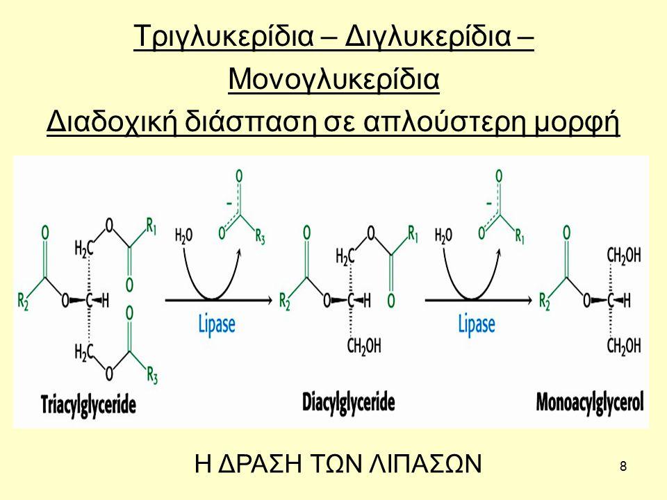 39 Μεταβολισμός μονο-, δι- και τριγλυκεριδίων Για τη βιοσύνθεση των (μονο-, δι- ) τριγλυκεριδίων το λιπαρό οξύ συνδέεται με παράγωγα της γλυκερόλης που προέρχονται από το α-γλυκερο-φωσφορικό οξύ.