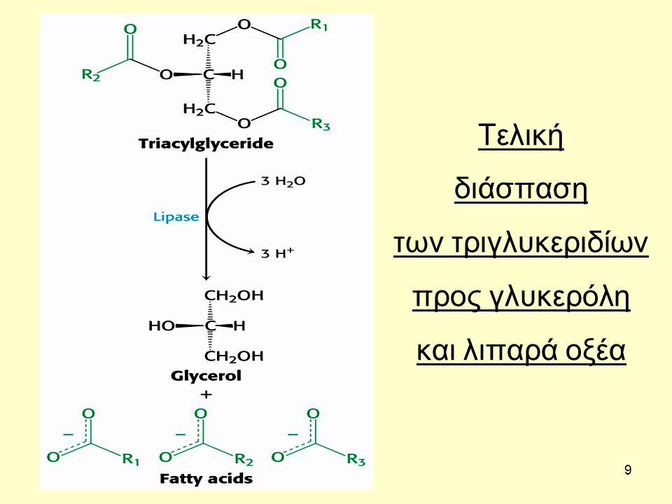 40 ΒΙΟΣΥΝΘΕΣΗ ΛΙΠΑΡΩΝ ΟΞΕΩΝ Για να βιοσυντεθεί ένα λιπαρό οξύ χρειάζεται μια πηγή ακετυλο-CoA και τα ένζυμα της εκ' νέου (de novo) βιοσύνθεσης Με διαδοχικές αντιδράσεις μεγαλώνει η ανθρακική αλυσίδα κατά δύο πάντα άτομα άνθρακα και σχηματίζεται έτσι στο κυττόπλασμα το λιπαρό οξύ που δεν μπορεί όμως να είναι μεγαλύτερο και πιο ακόρεστο από το παλμιτικό οξύ (16:0).