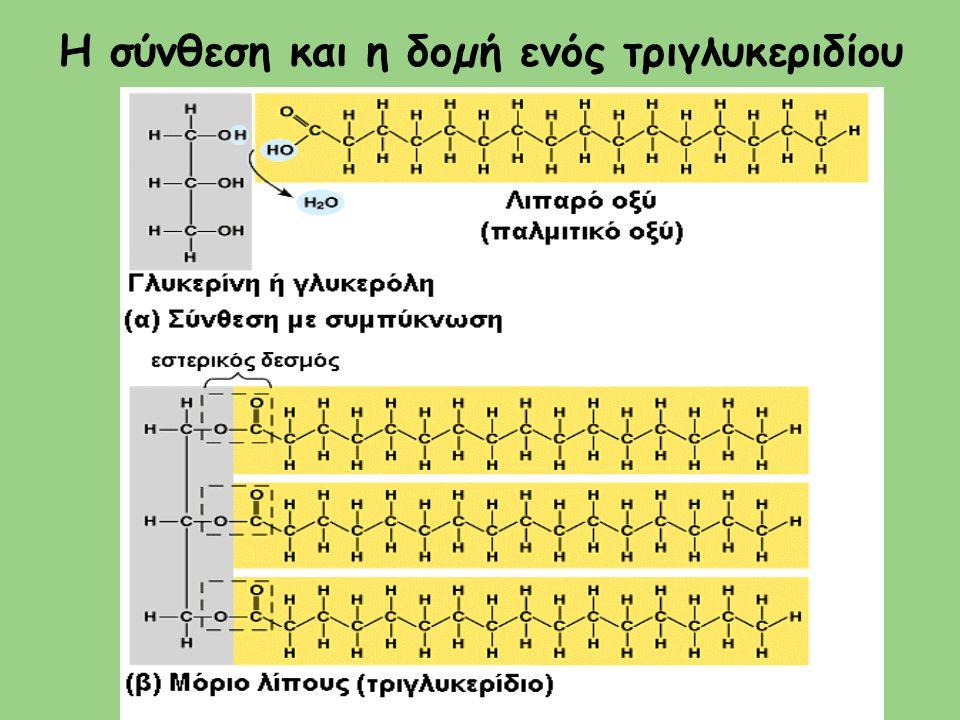 Η σύνθεση και η δοµή ενός τριγλυκεριδίου