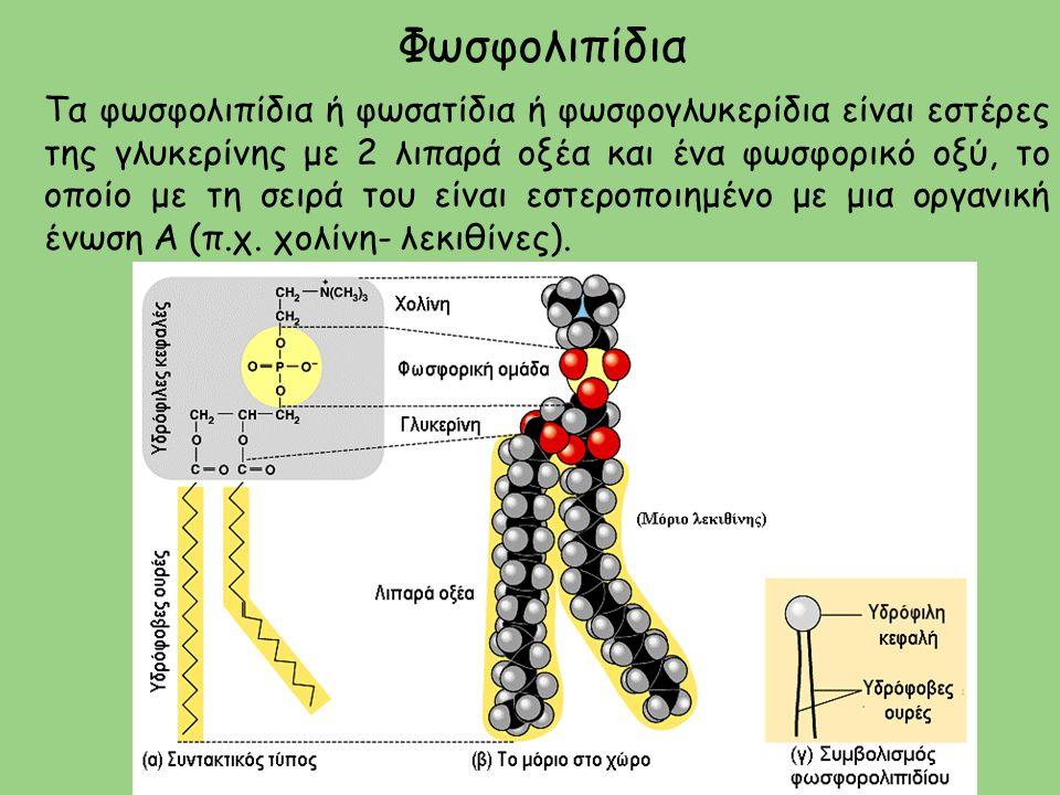 Φωσφολιπίδια Τα φωσφολιπίδια ή φωσατίδια ή φωσφογλυκερίδια είναι εστέρες της γλυκερίνης με 2 λιπαρά οξέα και ένα φωσφορικό οξύ, το οποίο με τη σειρά του είναι εστεροποιημένο με μια οργανική ένωση Α (π.χ.