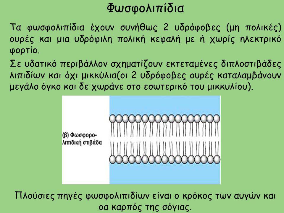 Φωσφολιπίδια Τα φωσφολιπίδια έχουν συνήθως 2 υδρόφοβες (μη πολικές) ουρές και μια υδρόφιλη πολική κεφαλή με ή χωρίς ηλεκτρικό φορτίο.