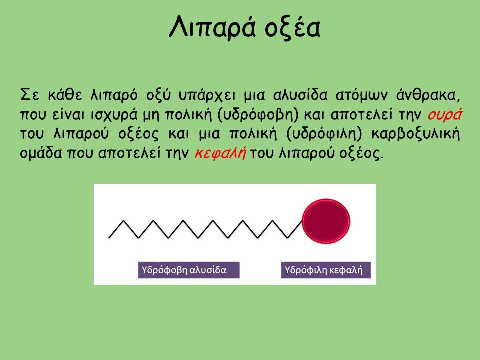Λιπαρά οξέα Σε κάθε λιπαρό οξύ υπάρχει μια αλυσίδα ατόμων άνθρακα, που είναι ισχυρά μη πολική (υδρόφοβη) και αποτελεί την ουρά του λιπαρού οξέος και μια πολική (υδρόφιλη) καρβοξυλική ομάδα που αποτελεί την κεφαλή του λιπαρού οξέος.