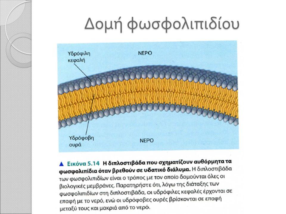 Δομή φωσφολιπιδίου
